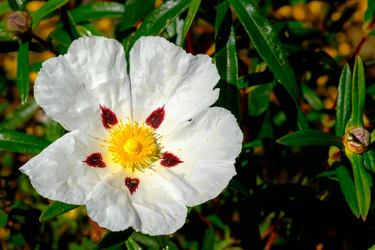 hiking alentejo flower