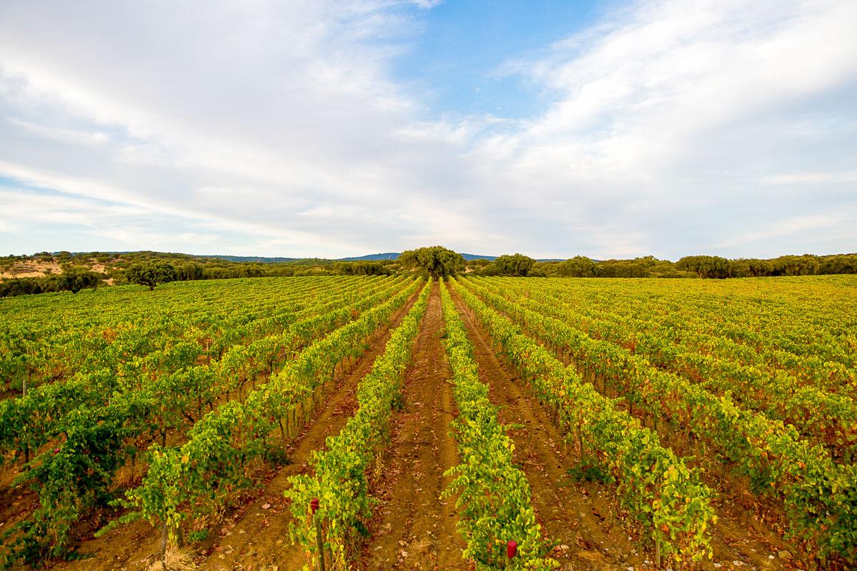 trekking vineyard alentejo
